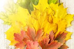 槭树在被安排的白色木背景离开在爱好者形状与拷贝空间 库存照片
