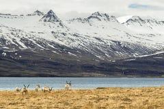 槭树在他们的自然生态环境 免版税库存图片