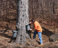 槭树季节糖 免版税库存图片
