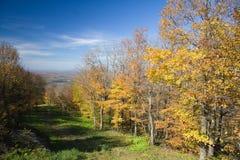 槭树山腰 库存照片
