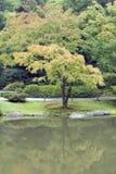 槭树庭院 免版税库存图片