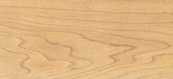 槭树木头 库存照片
