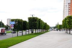 槭树树在站点的在城市 装饰结构树 免版税库存图片