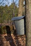 槭树树汁桶 库存图片