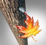 槭树树汁流动 免版税库存照片