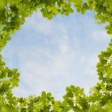 槭树梦想 免版税库存照片