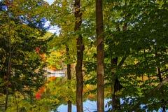 槭树森林在秋天 库存图片