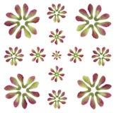 槭树模式结构树翼 免版税库存照片