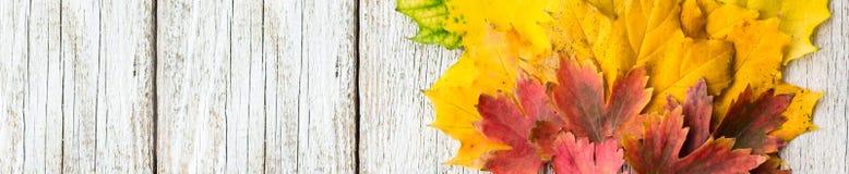槭树横幅在被安排的白色木背景离开在爱好者形状与拷贝空间 库存图片