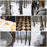 槭树生产糖浆 免版税图库摄影