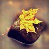 从槭树的五颜六色的打破的叶子在玄武岩石头在被弄脏的水中 免版税图库摄影