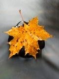 从槭树的五颜六色的打破的叶子在玄武岩石头在被弄脏的水中 免版税库存图片