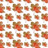 槭树的样式 免版税库存图片