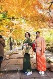 槭树的红色叶子在秋天日本 库存图片