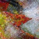 槭树的冻叶子 免版税图库摄影