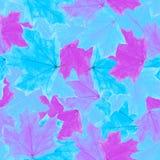 槭树离开无缝的样式背景 免版税库存照片