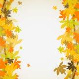 槭树秋天背景,向量 免版税库存照片