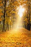 槭树胡同。 免版税图库摄影