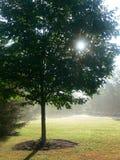 槭树薄雾夏天结构树 免版税库存图片