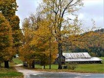 槭树被排行的道路在秋天 库存图片