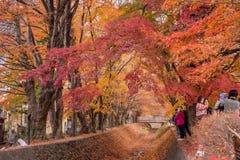 槭树走廊或Momiji Kairo 库存照片