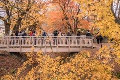 槭树走廊或Momiji Kairo 库存图片