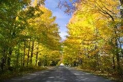 槭树隧道 免版税库存照片