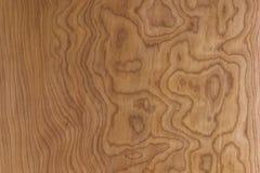 槭树面板 免版税库存照片