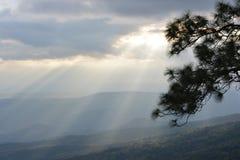 槭树,叶子, Phukradueng, Loei 免版税库存图片