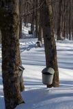 槭树轻拍和桶 免版税图库摄影