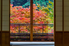 槭树 库存图片