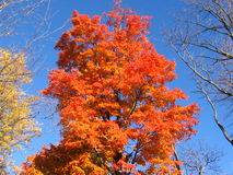 槭树10月糖 免版税库存图片