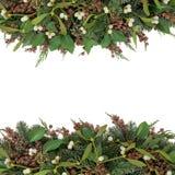 槲寄生和冬天植物群 免版税库存照片