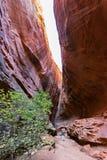 槽孔峡谷,毛刺足迹在犹他 库存照片