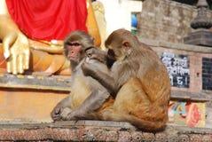 模仿加德满都短尾猿猴子尼泊尔寺庙 免版税库存图片