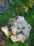 模仿石头的木树干 免版税库存照片