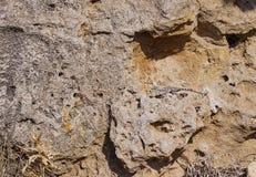 模仿蜥蜴Stellagama大师在岩石的 免版税图库摄影