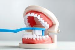 模型牙牙刷 免版税图库摄影