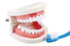 模型牙牙刷 免版税库存照片
