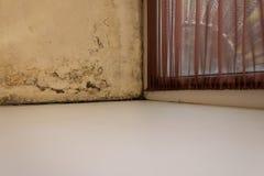 模子、真菌和削皮油漆在墙壁上 免版税库存照片