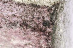 模子和湿气积累Detal在桃红色墙壁上的 免版税图库摄影