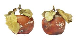 模子生长在老苹果的套 隔绝在白色背景照片 食品污染,坏损坏了令人厌恶的腐烂的organi 免版税库存照片