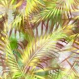 模式无缝热带 在轻的背景的黄绿棕榈叶 库存图片