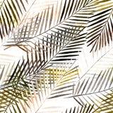 模式无缝热带 棕榈叶 图库摄影