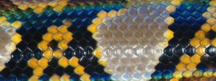 模式皮肤蛇 免版税库存照片