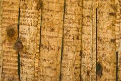 模式结构树墙壁 免版税库存图片