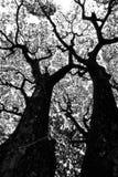 模式结构树 库存图片