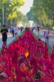 模糊的人民跑在旁边惊人与发光的橙色叶子的美丽的红色开花的灌木,在泰国公园 免版税库存照片