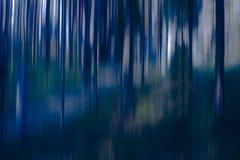 模糊的树在森林 免版税库存照片