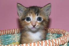 模糊的蓬松白棉布和染黑4坐在多彩多姿的星期的小猫 库存照片
